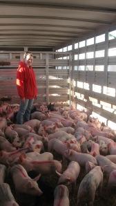 Swine App 004